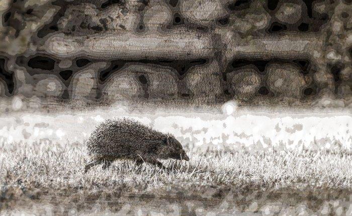 The Hedgehogs in theGarden