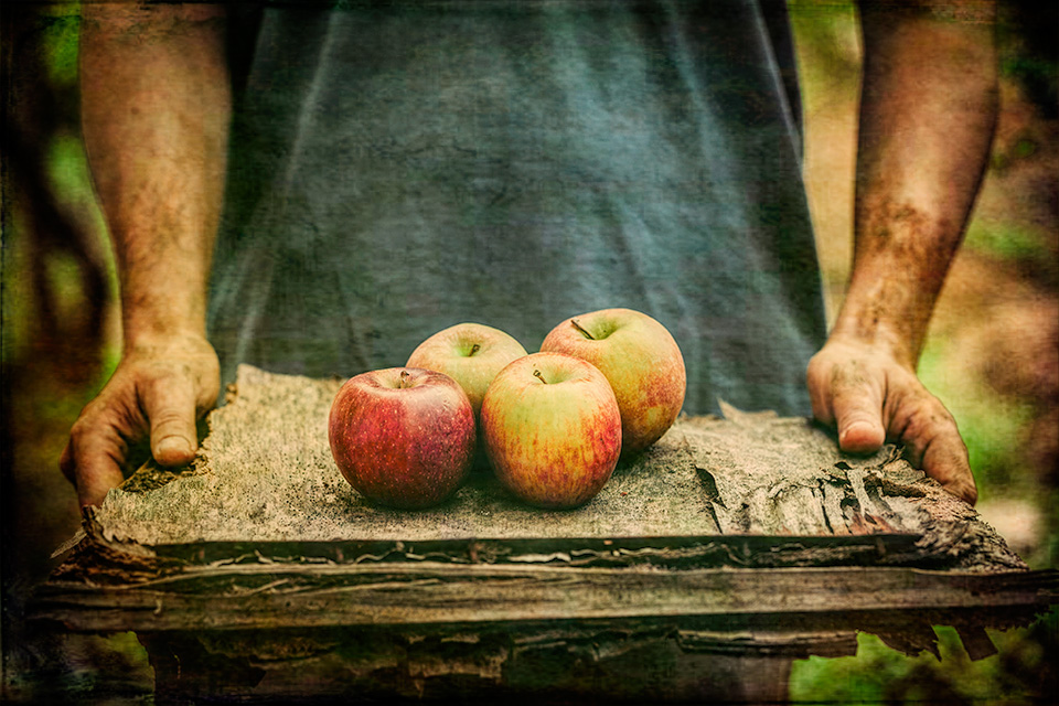 Apples from the Harvest